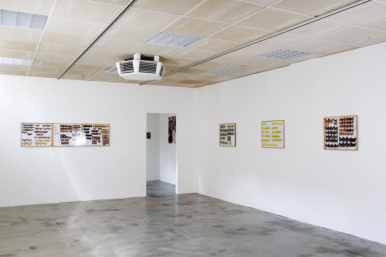 papillons installation view Gallery Obrist 2008 c
