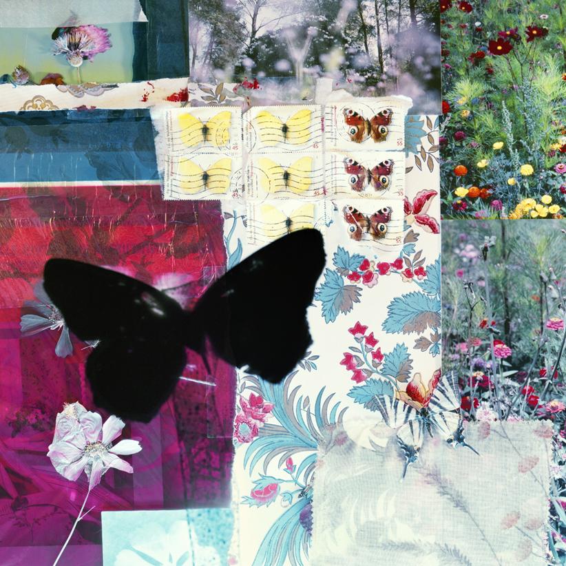 butterflies 07