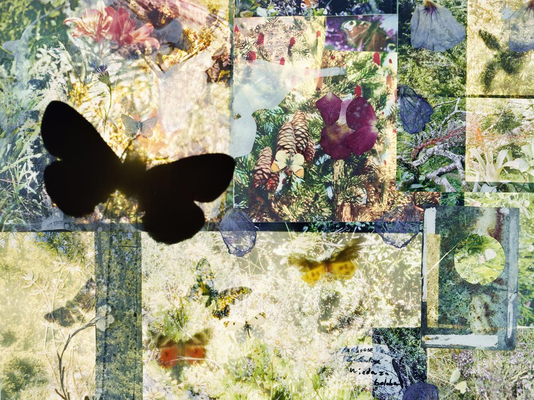 butterflies 08