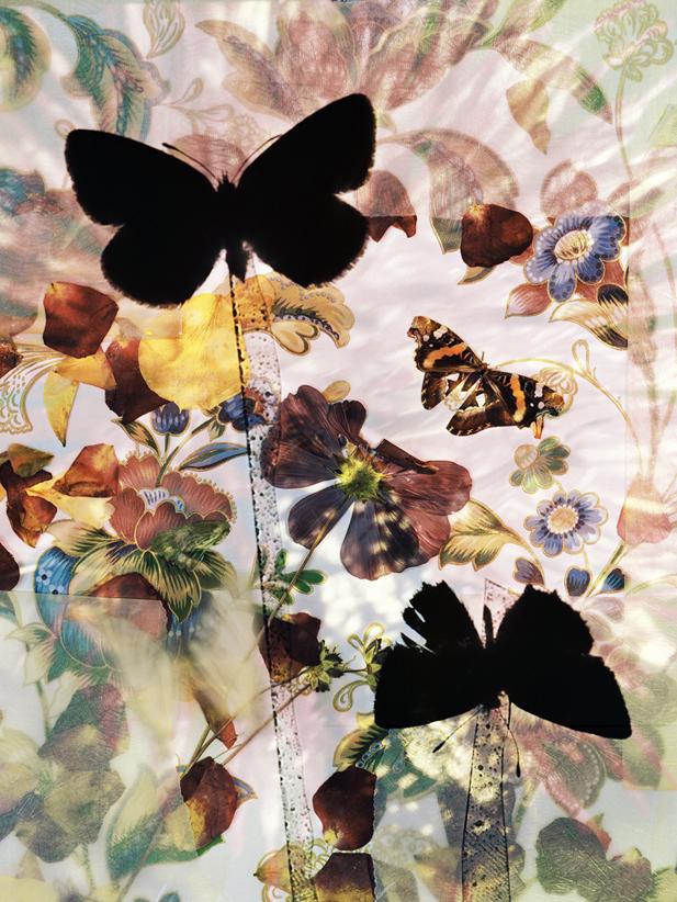 butterflies 09