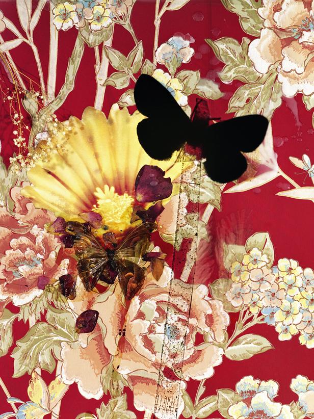 butterflies 11