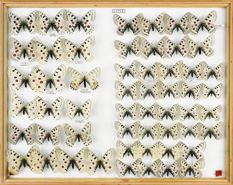 papillons Apollos UDSSR a