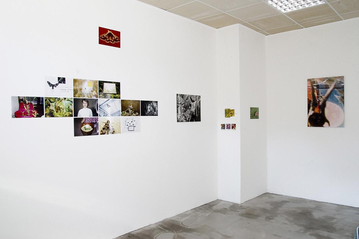 papillons wunderkammer installation view Galler Obrist Essen 2008 g