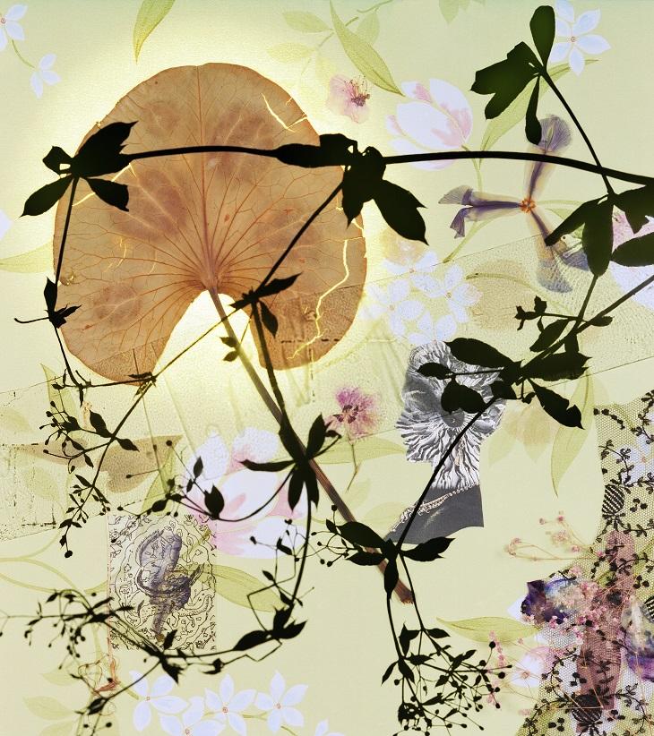 somnambule flowers 30