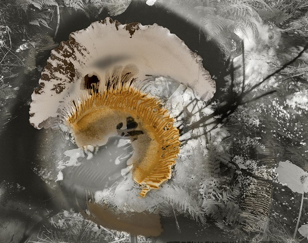 sovereign fruits 03 Thomas Zika art photography