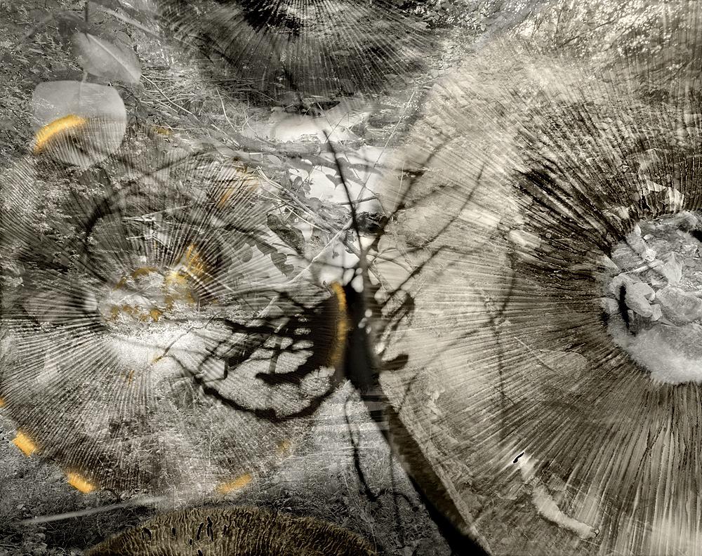 sovereign fruits 06 Thomas Zika art photography