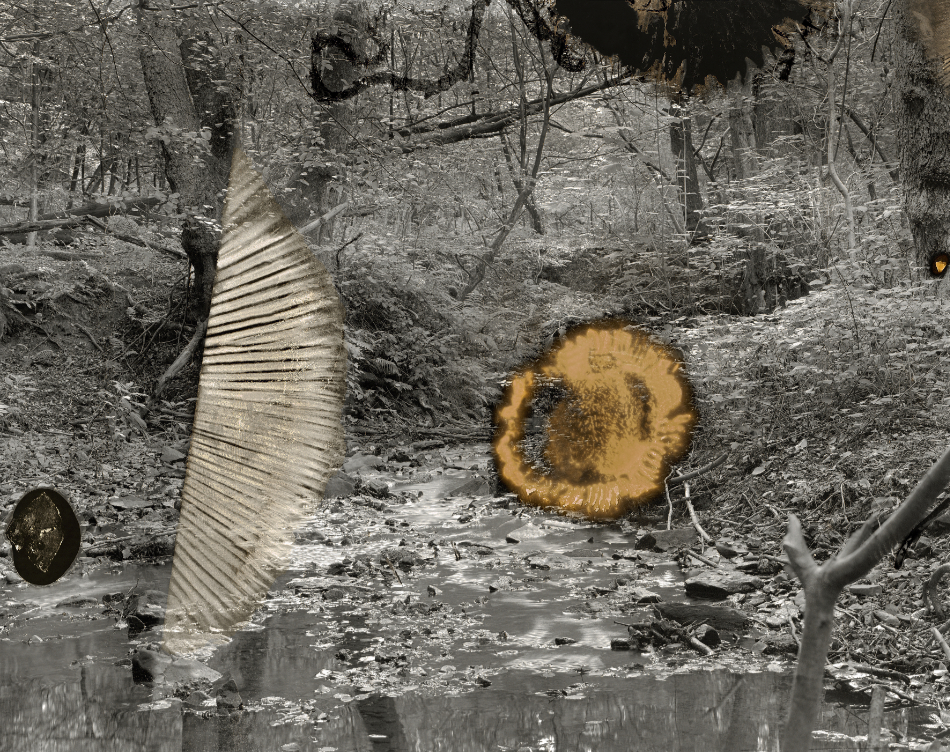 sovereign fruits 13 Thomas Zika art photography
