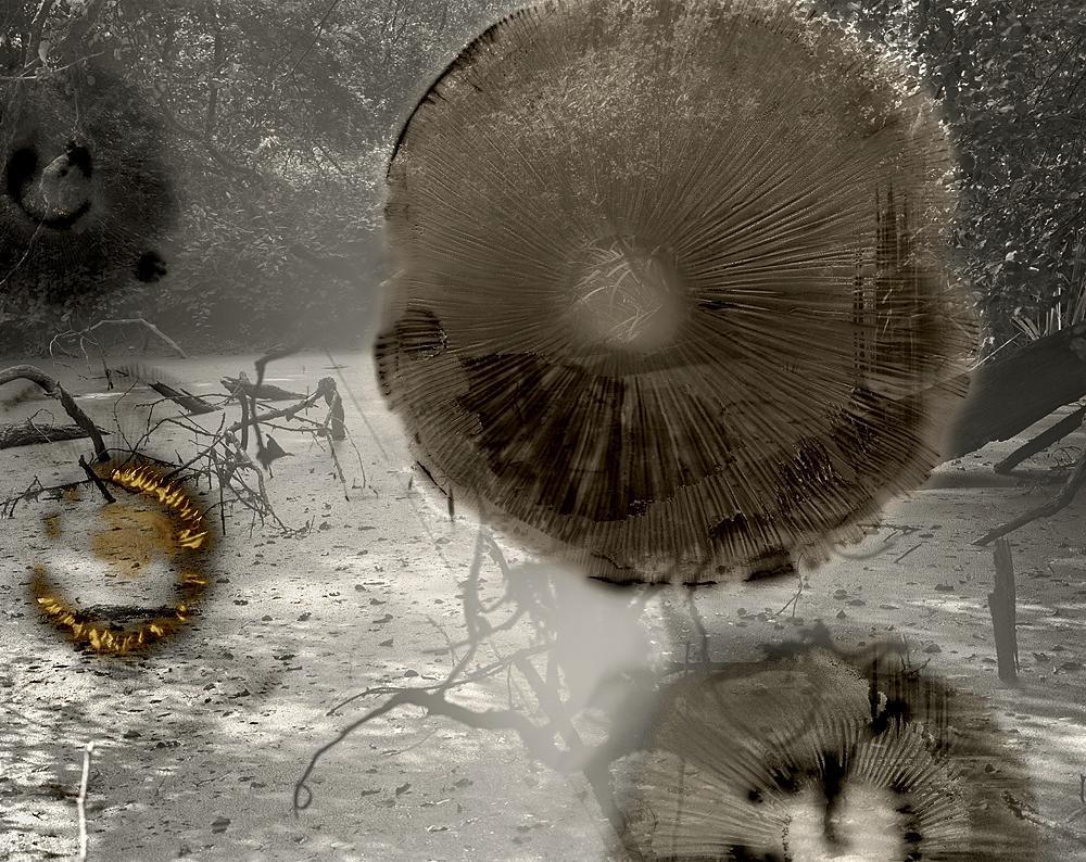 sovereign fruits 17 Thomas Zika art photography