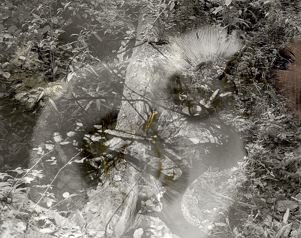 sovereign fruits 51 Thomas Zika art photography